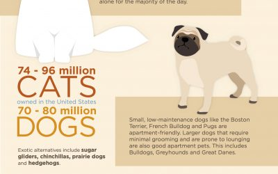 The Best Pets for Your Space!